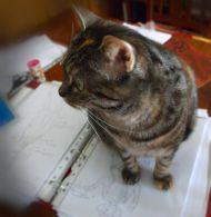 Is your cat asaboteur???